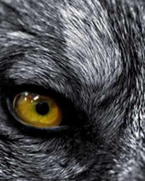 Интересное о диких животных от Тимофея Баженова