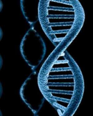 Структура и функции нуклеиновых кислот. Часть 3