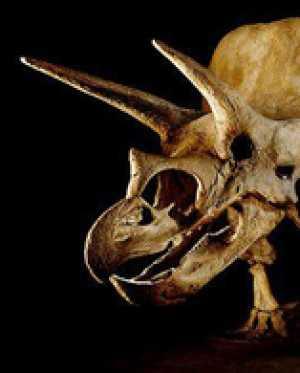 Введение в палеонтологию