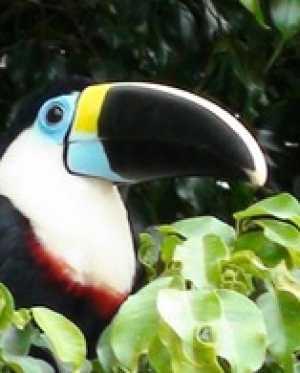 Эквадор. Национальный парк Ясуни